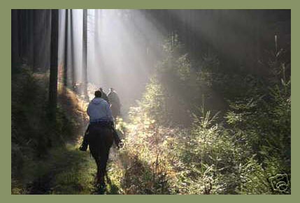 Wanderreit-Urlaub im Westerwald
